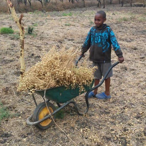 gardening farming
